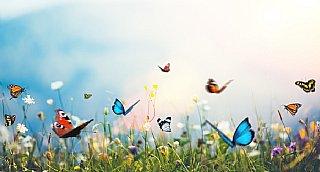 Schmetterlinge - Vielfalt in ihrer schönsten Form! © istock_borchee